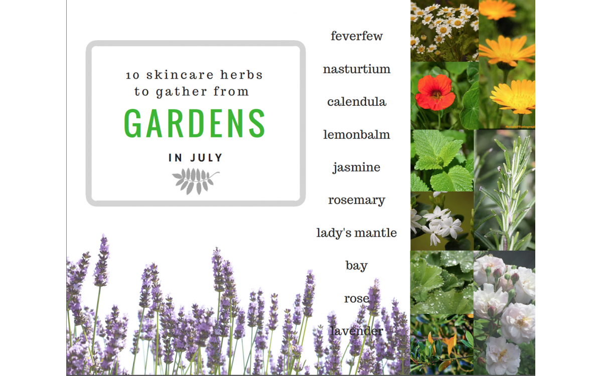 10 skincaere herbs from gardens