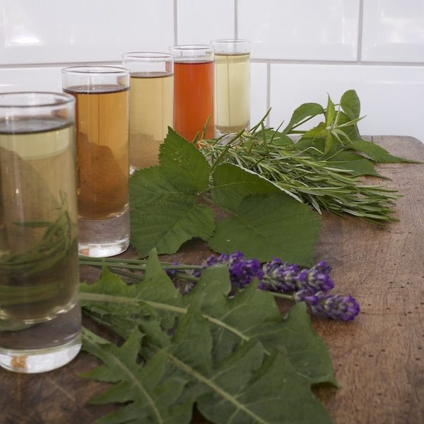 Array of herbal infusions