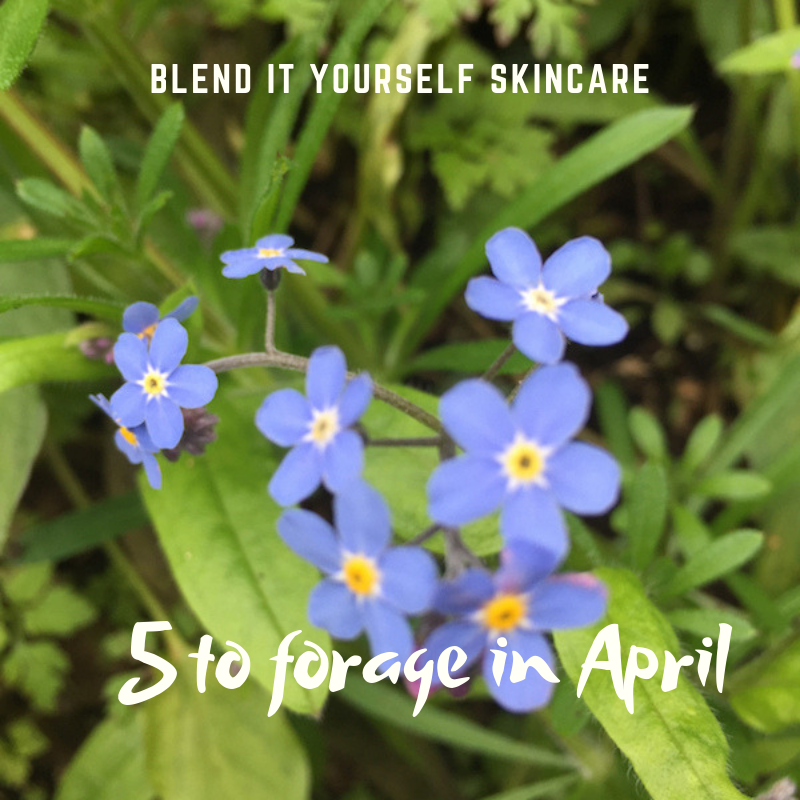 5 plants to forage in April and use in Blend it Yourself Skincare
