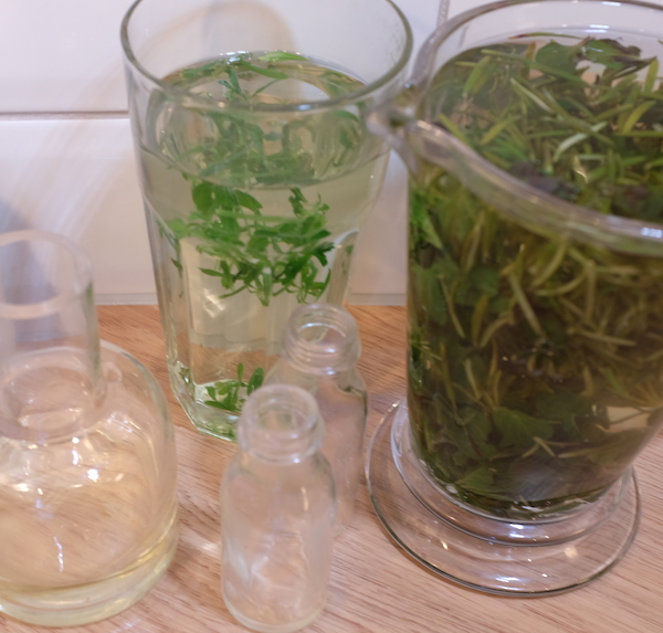 Many of the plants that grow commonly around us can bring vitality to our skincare for example dandelions, cleavers, nettles, plantain and chickweed. Here Laura Pardoe provides recipes for natural skincare using the herbs that grow around plentifully us.