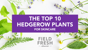 The top 10 plants to gather for making local natural fresh skincare
