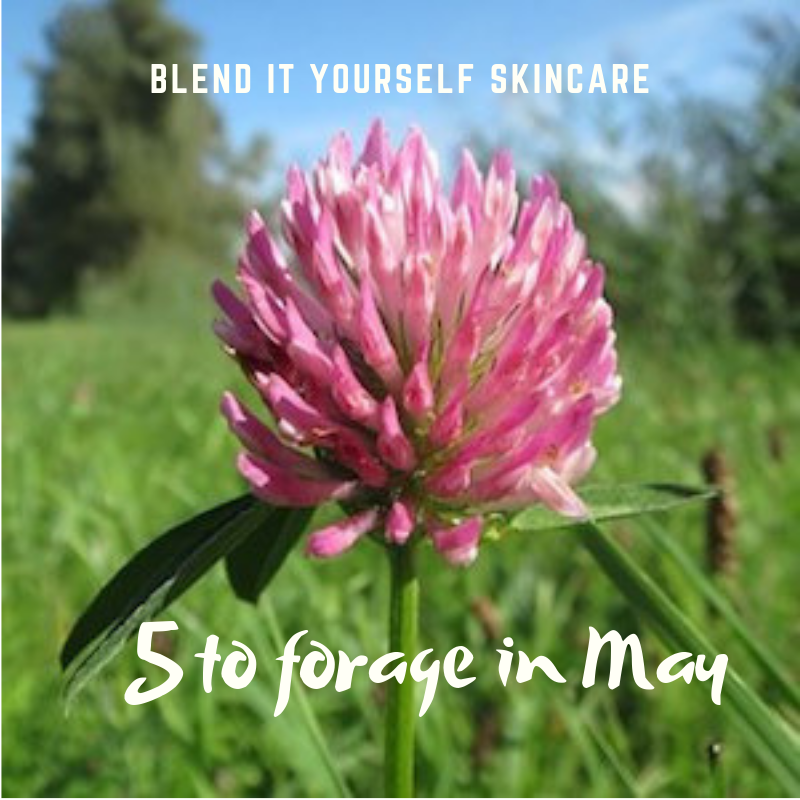 5 common plants that you can gather in May and used in blend it yourself skincare