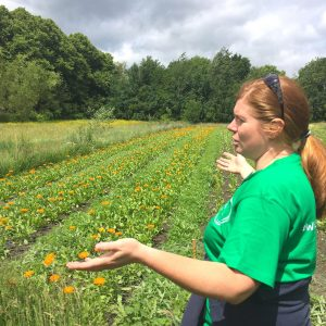 Felicity and the Weleda calendula field
